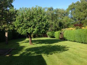 Oratory_Back_garden